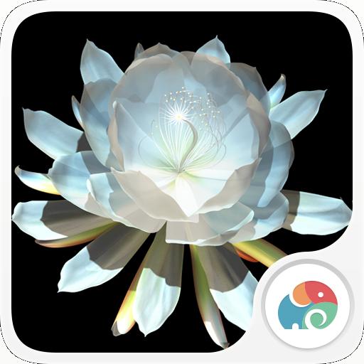 3D月下美人梦象动态壁纸1.0 安卓版