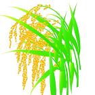 超级水稻手游