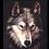 黑狼ASP解密工具(asp代码加密工具破解)1.0 绿色版