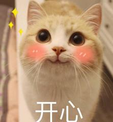 网红bobi猫猫咪(欧美乖巧表情)表情奔放表情包图片