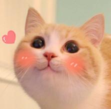 乖巧猫表情|网红bobi猫猫咪水滴陌陌gif表情包图片(表情乖巧表情图片