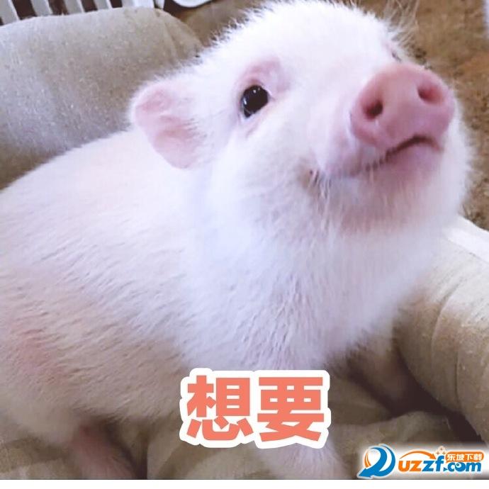 日常吸猪表情图片素材多面体表情包图片