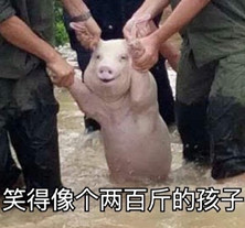 台风中获救1的猪表情金链表情包图片