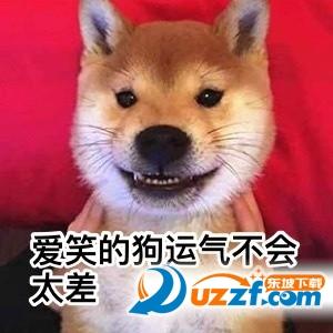 2017七夕图片狗大全qq可爱表情包原创动态单身图片