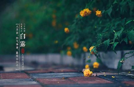 教育素材 素材下载 → 24节气白露节气图片 高清版