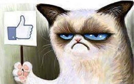 大全竖大拇指猫咪表情微信说说苦的上班搞笑图片图片