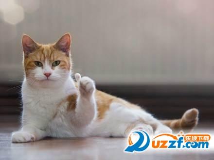 猫咪竖大拇指表情下载|表情竖大拇指表情打脸猫咪动态图片