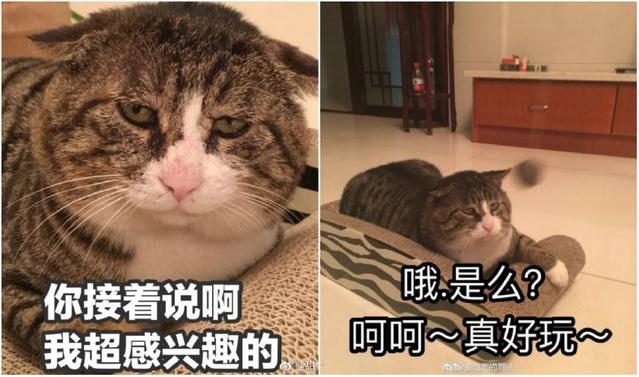 阿肥喵咪动态表情橙子表情包图片图片