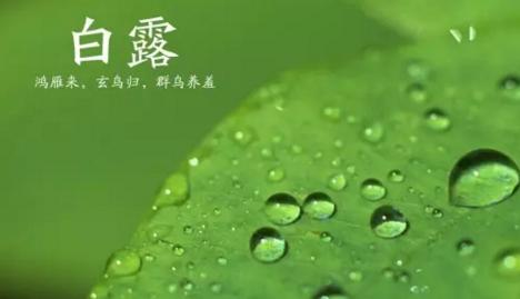 2017白露节气手抄报高清图片素材大全完整版