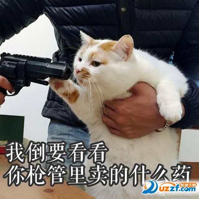 楼板娘猫gif表情包无水印完整版图片