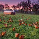 鸡场自动化管理系统免费版