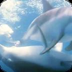 海豚视频动态壁纸app1.0.3 最新安卓版