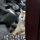 楼板娘猫gif表情包无水印完整版