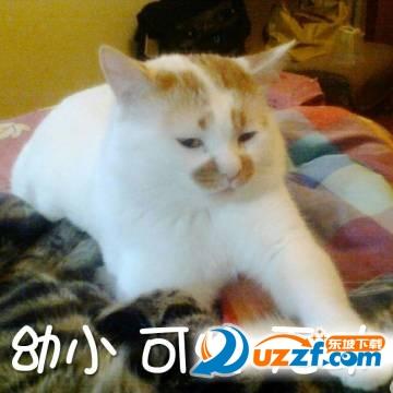 楼板娘猫gif表情包