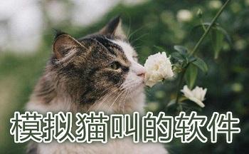 猫叫声翻译app_猫叫模拟器