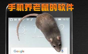 手机养老鼠的软件