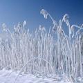 2018年的第一场雪日记在线免费版