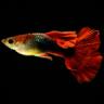 鱼缸计算器app