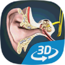 耳朵和听力机制互动教育3D软件