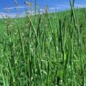 绿色植物是生物圈中有机物的制造者ppt课件