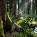 森林里1.27正式版生存地图