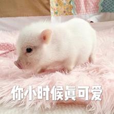 粉红小猪仔表情包