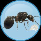 Antkeeper蚂蚁模拟