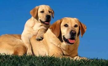 手机养狗软件