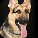 犬吠声震动软件6.9 安卓版