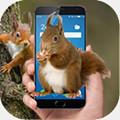 松鼠屏幕恶作剧app