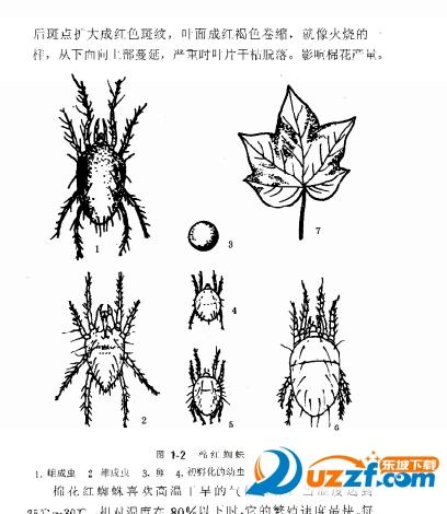 棉花病虫害防治实用技术电子书下载截图1