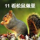 鄂教小学语文四年级上册看松鼠做巢