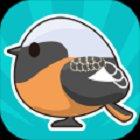 观察小鸟21.1安卓版