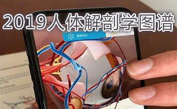 人体解剖学图谱内脏2019
