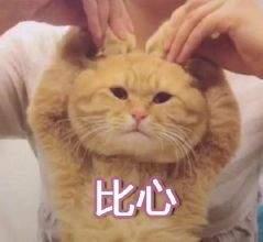抖音猫咪比心表情包截图1