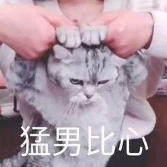 抖音猫咪比心表情包截图0