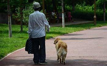 老人走路赚钱软件