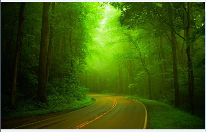 林间小径风景高清壁纸截图0