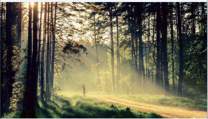 林间小径风景高清壁纸截图2