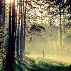 林间小径风景高清壁纸