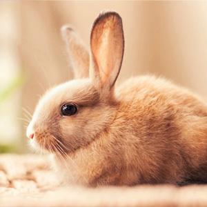 兔子电脑桌面壁纸高清全屏
