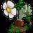 植物大�鸾┦�中文年度加��版游�蚪怄i破解版