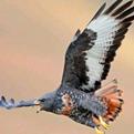 关于老鹰的作文3篇