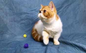上门喂猫的app_上门喂养宠物的软件