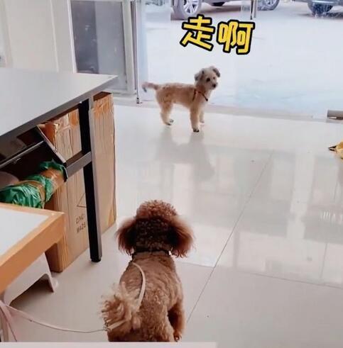 狗子喊小伙伴出去玩表情包截�D0