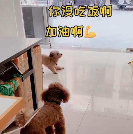 狗子喊小伙伴出去玩表情包截�D2