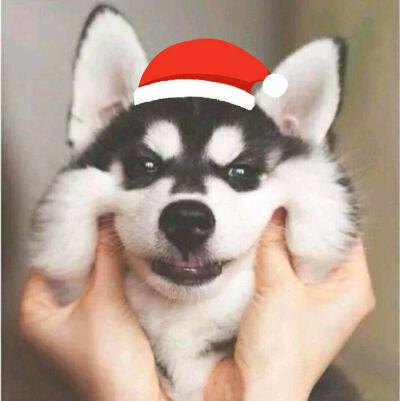 一只狗�е�圣�Q帽的�^像截�D2