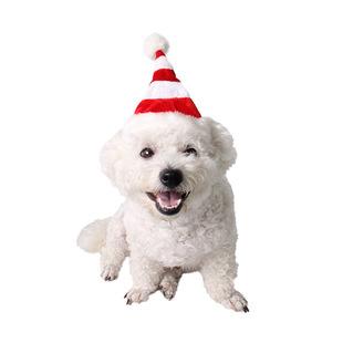 一只狗�е�圣�Q帽的�^像截�D1