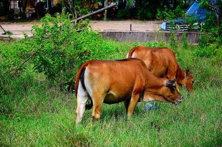 抖音老牛吃嫩草表情包截图1