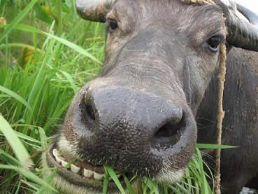抖音老牛吃嫩草表情包